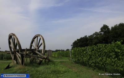 Wijngaard in de buurtschap Heide