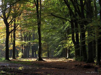 De kleine buurtschap Heidehuizen wordt omringd door de bossen van Beetsterzwaag en Olterterp. (© Afanja / https://afanja.wordpress.com)
