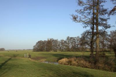 Hoewel 'grote' stad Woerden 'om de hoek' ligt, heb je in de - nog net - Kamerikse buurtschap Houtdijk nog rondom weidse uitzichten, hier met op de achtergrond een geriefhoutbosje. (© Jan Dijkstra, Houten)