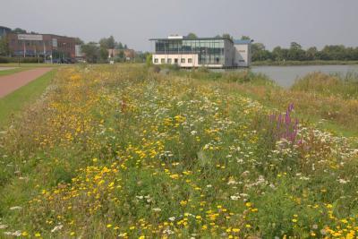 De in 2017 aangelegde Vlinderidylle De Veste is een parkachtige strook bloemweiden met wandelpaden, langs de Waterveste en Voorveste in Houten. De bloemen zijn ideaal voor vlinders, maar ook voor andere insecten. (© Jan Dijkstra, Houten)