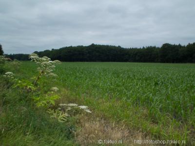 Huis ter Heide, Tonckensbosch