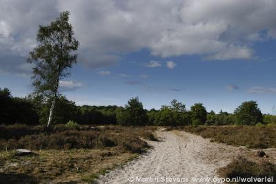 Bikbergen, Limitische Heide