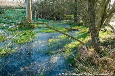 Klarenbeek, Beekbergerwoud, kwelwater stroomt uit de grond