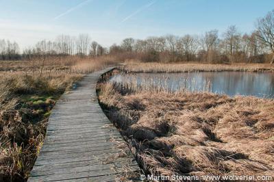 Klarenbeek, Beekbergerwoud, wandelpad door het moerasgebied