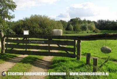 Lang vóór de term 'burgerparticipatie' was uitgevonden, deden ze daar in Kornhorn al aan: sinds 1997 hebben tientallen vrijwilligers uit het dorp het nieuwe natuurgebied Curringherveld zelf ingericht en beheerd. Zie verder het kopje Landschap etc.