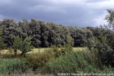 Krimpen aan de Lek, natuurgebied De Kleine Zaag