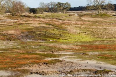 Laren, Laarder of Groot Wasmeer in 2014. Rijke mosflora en korstmossen op de afgegraven delen