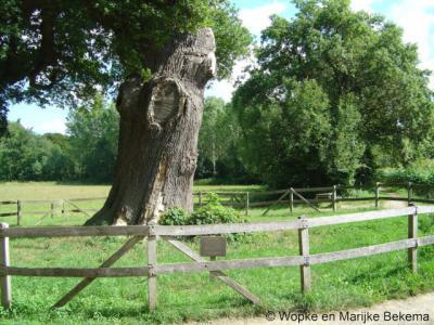Laren is o.a. bekend van landgoed Verwolde, dat op zijn beurt weer bekend is van de Dikke Boom (7,60 meter omtrek!); bovendien een erg oude boom (geschatte leeftijd: tussen de 450 en 500 jaar oud).