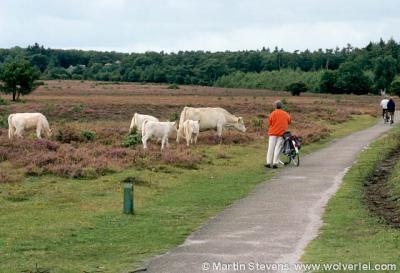 Laren, Zuiderheide, de hei tussen Hilversum en Laren