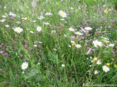 Een ander initiatief van Stichting Lopikerkapel was het in 2014 realiseren van een bloemrijke berm, die door de inwoners zelf wordt onderhouden. Ziet er een stuk aantrekkelijker uit én goed voor de bedreigde bijen en vlinders!
