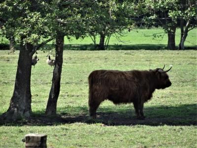 Aan de Hooiweg in Lucaswolde kun je de koe bij de horens vatten. (© Harry Perton / https://groninganus.wordpress.com/2020/05/21/rondje-noordwijk)