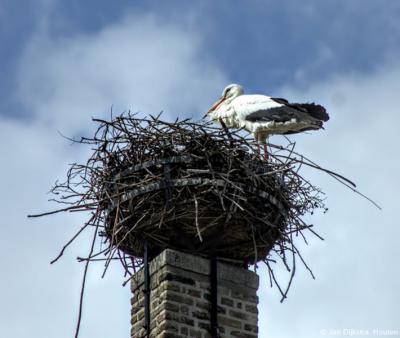 Deze ooievaar is zojuist geland op het nest op het dak van de Hervormde kerk in Molenaarsgraaf. Zo te zien vindt hij het wel een geschikte plek om komend seizoen zijn ding te doen...
