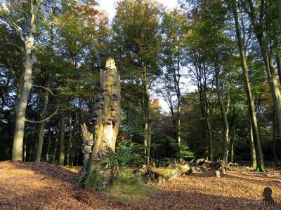 De fotograaf van de foto hierboven ontdekte in het bos bij Olterterp ook nog een door de natuur zélf geschapen boomsculptuur (© van beide foto's: www.afanja.nl)