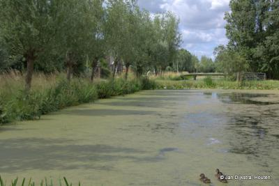 Oosteinde, al dat water zorgt voor een heerlijke diversiteit en biodiversiteit