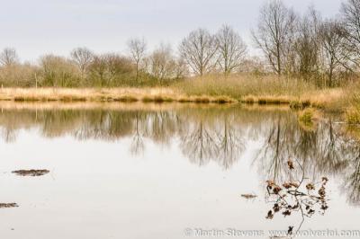 De Groote Peel bij Ospeldijk is een Nationaal Park op de grens van Noord-Brabant en Limburg, en onderdeel van De Pelen, zoals de Mariapeel, Deurnse Peel en Nationaal Park De Groote Peel tegenwoordig gezamenlijk ook wel worden genoemd.