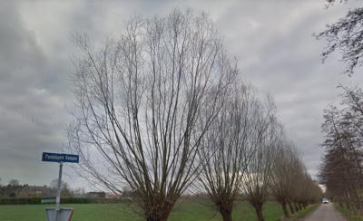 Pandelaarse Kampen is een buurtschap in de provincie Noord-Brabant, gemeente Gemert-Bakel. T/m 1996 gemeente Gemert. De buurtschap heeft geen plaatsnaamborden, zodat je slechts aan de gelijknamige straatnaambordjes kunt zien dat je er bent aangekomen.