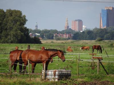 Deze foto is een mooi symbool voor het platteland (paarden in Peizermade) met de oprukkende stad (in dit geval Groningen) die steeds dichterbij komt (© Harry Perton)