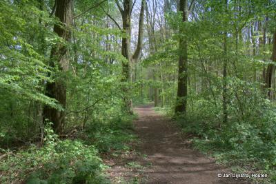 Ook kun je er een mooie wandeling maken om de plas Everstein en door het Hagesteinse bos(je)