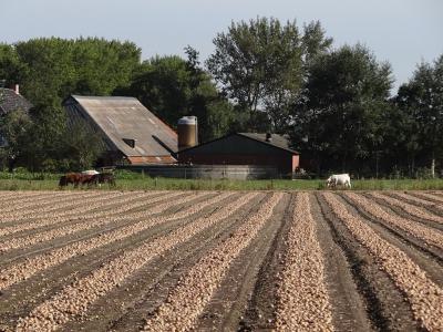 Boerderij in Rasquert, met op de voorgrond een zojuist geoogst uienveld. (© Harry Perton / https://groninganus.wordpress.com/2019/09/14/van-baflo-naar-leens-op-open-monumentendag)
