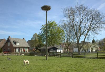 Met een beetje geluk kun je in het broedseizoen ook nog ooievaars tegenkomen in Rhenoy. (© Jan Dijkstra, Houten)