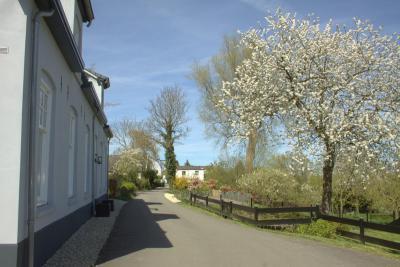 Langs de Lingedijk in Rhenoy kun je goed zien dat je in de Betuwe bent; regelmatig kom je er fruitbomen tegen. (© Jan Dijkstra, Houten)