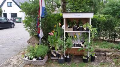 Van maart t/m oktober is er op Ruigenhoek 20 een verkoopstalletje Little Garden, waar je zonder bestrijdingsmiddelen gekweekte vaste planten kunt kopen voor schappelijke prijzen.
