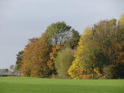 Bomen in kleurige najaarstinten nabij Sint Annen, oktober 2016 (© Harry Perton/https://groninganus.wordpress.com)