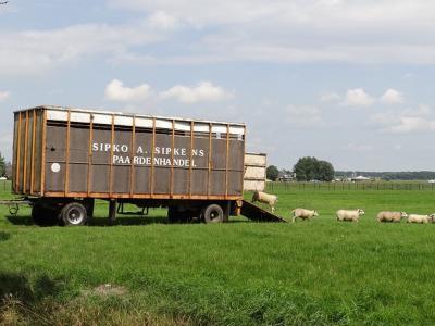 Paardenhandelaar Sipko Sipkens kan van de paarden alleen kennelijk niet rondkomen en zet daarom in buurtschap Slaperstil af en toe ook wat schaapjes op het droge. (© Harry Perton / https://groninganus.wordpress.com/2017/07/22/rondje-ezinge-11)