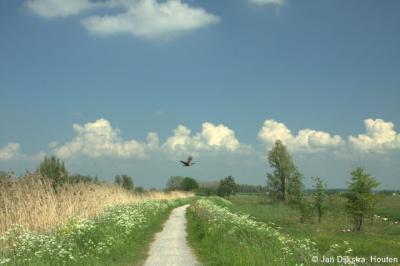 In natuurgebied Zouweboezem heb je geen last van overstekend verkeer. Alleen steken er wel regelmatig vogels over...