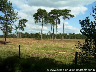 Strijbeek, Strijbeekse Heide vanaf de Goudbergseweg