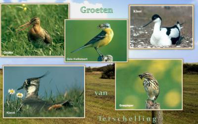 Vogels van de Boschplaat op Terschelling (© Jan Dijkstra, Houten)