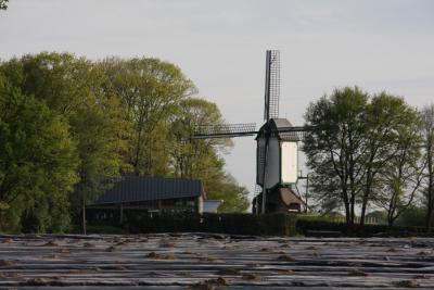 Een van dé bezienswaardigheden in de buurtschap Waterschei is de prachtige in 1999 herbouwde Prins Bernhard Molen. (© Buurtvereniging Put Waterschei/www.facebook.com/Put-Waterschei-237538929758813)