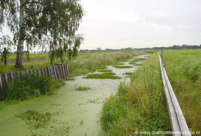 Westerdiepsterdallen, gezonde populatie Krabbenscheer in het vóór de grote 'verbouwing' deels nog ongerepte Westerdiepsterdalkanaal