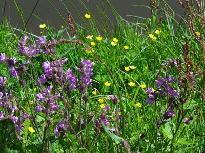 Ook in Winde doen ze gelukkig aan 'bloemrijke bermen' (© Harry Perton / https://groninganus.wordpress.com/2019/05/12/rondje-roderwolde-peize-eelde)