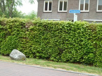 Zandeind is een buurtschap in de provincie Noord-Brabant, in de regio Hart van Brabant, gemeente Goirle. T/m 1996 gemeente Alphen en Riel.