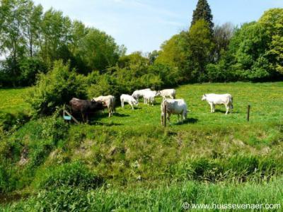 Zevenaar, de ca. 50 Piemontese koeien van Huis Sevenaer worden op duurzame en diervriendelijke wijze gehouden. En dat proef je! Zie voor nadere info de site van Huis Sevenaer onder het kopje Landschap etc.