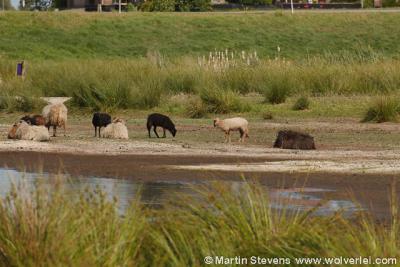 Zevenhoven, nieuw natuurgebied De Groene Jonker