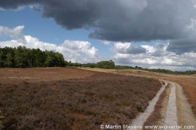 Zuiderheide tussen Laren en Hilversum