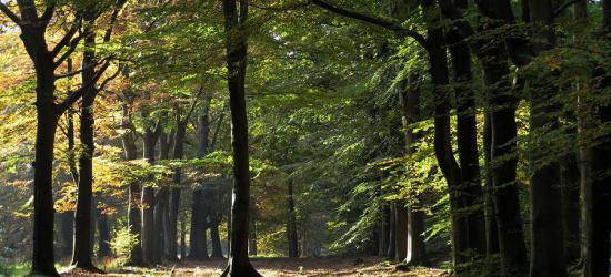 De kleine buurtschap Heidehuizen wordt omringd door de bossen van Beetsterzwaag en Olterterp (© van deze en de andere foto's op deze pagina: weblog Afanja/https://afanja.com)