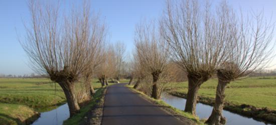 Bij een deel van de buurtschap Houtdijk staan ook rijen knotwilgen langs de weg en het water (© Jan Dijkstra, Houten)