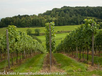 Vanuit het Geuldal op weg naar Stokhem kun je wijngaarden tegenkomen.