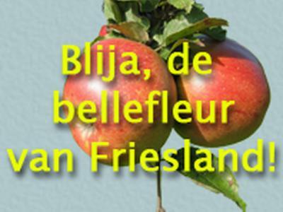 Een vroegere schimp- of scheldnaam voor de inwoners van Blije was Blijer Bellefleuren. Tegenwoordig is dit kennelijk een 'geuzennaam' (d.w.z.: wordt het in positieve zin gebruikt door de inwoners zelf), getuige het logo op de lokale dorpssite.