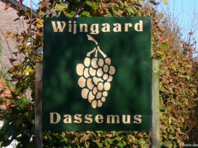 Wijngaard Dassemus, in de gelijknamige buurtschap bij Chaam, is in 2005 van start gegaan en wil geleidelijk groeien naar een productie van 15.000 liter (= ca. 20.000 flessen) wijn per jaar.