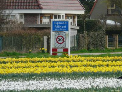 Egmond aan den Hoef is een dorp in de provincie Noord-Holland, in de streek Kennemerland, gemeente Bergen. T/m 30-6-1978 gemeente Egmond-Binnen. Per 1-7-1978 over naar gemeente Egmond, in 2001 over naar gemeente Bergen.