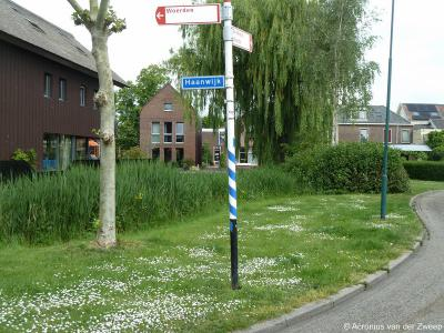 Haanwijk is een buurtschap en polder in de provincie Utrecht, in de regio Groene Hart, gemeente Woerden. De buurtschap Haanwijk heeft geen plaatsnaamborden, zodat je slechts aan de gelijknamige straatnaambordjes kunt zien dat je er bent aangekomen.