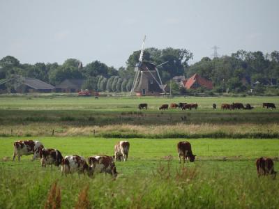 Buurtschap Hoeksmeer, buurtschapsgezicht met o.a. poldermolen De Meervogel (© Harry Perton / https://groninganus.wordpress.com)