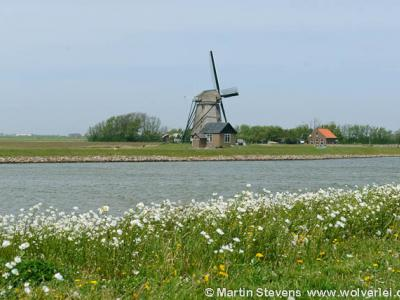 Texel, Drijvers Vogelweid De Bol met Molen Het Noorden