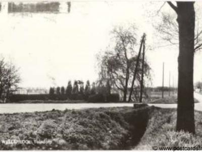 Oude ansichtkaart van de buurtschap Tuindorp bij het dorp Wellerlooi